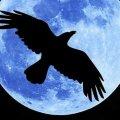 Полнолуние 23 ноября: что обязательно нужно сделать каждому знаку зодиака