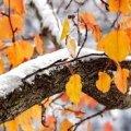 Погода у Житомирі та Житомирській області на вихідні