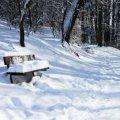 Житомирська міськрада закликала підприємців прибирати прилеглу територію від снігу та льоду