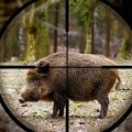 З початку відкриття сезону полювання виявлено 19 порушень правил полювання