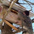 На Житомирщині підтримуватимуть лісове бджільництво