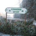 На Житомирщині стартує передноворічна ялинкова кампанія