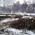Житомиряни проти вирізання 200 дерев для реконструкції набережної