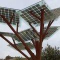 У Житомирі невдовзі з'явиться «сонячне дерево»
