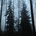 Кабмин передал около 20 гектаров леса в Житомирской области для титанового рудника