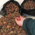 Майже 25 кілограмів бурштину виявили прикордонники на Закарпатті