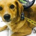 1175 собак прочіпували у Житомирі безкоштовно