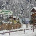 Лісгоспи Житомирського обласного управління лісового та мисливського господарства реалізували 37,5  тисяч сосен, смерек та ялин
