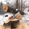 На Житомирщині під час валки дерева загинула людина