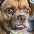На Житомирщині чоловік застрелив пса, що належить його зятеві
