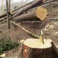 На Житомирщині організатору злочинної групи та її учасникам повідомили про підозру в незаконній порубці дерев на суму 380 тис грн