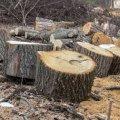 На Житомирщині за незаконну порубку лісу майже на 250 тис грн трьох осіб засудили до обмеження волі з іспитовим терміном