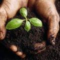 На Житомирщині 90 га землі вартістю 14 млн грн були незаконно передані в оренду