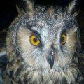 Місце, де збуваються мрії: Що являє собою єдиний притулок для птахів та дрібних тварин на Житомирщині. ФОТО