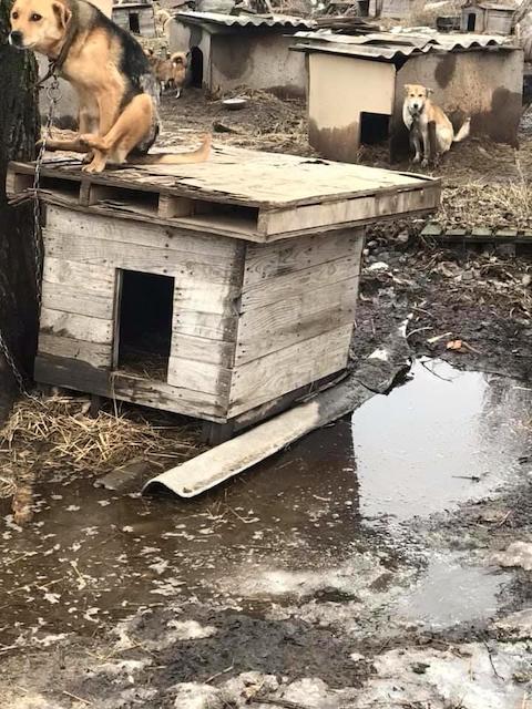 Куди діває виділені містом кошти керівниця притулку для тварин у Новограді-Волинському? ФОТО