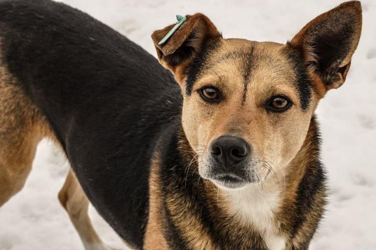 """В Житомирі КП """"Центр захисту тварин"""" пропонує стати опікуном будь-якого їхнього підопічного. ФОТО"""
