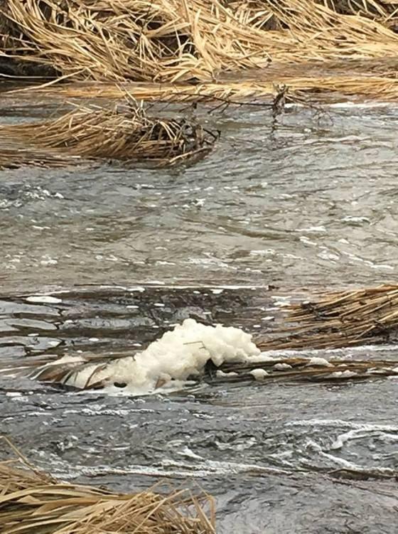 На Житомирщині знову забруднюється річка Хомора. ФОТО