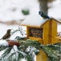 Прогноз погоди в Житомирі на 6 лютого