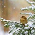 Яка ж погода буде в Житомирі 7 лютого