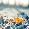 Завтра, 8 февраля, ночью местами до 12 градусов мороза