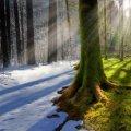 Прогноз погоди в Житомирі на 15 лютого