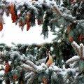 Прогноз погоди в Житомирі на 19 лютого