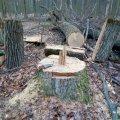На Житомирщині затримали лісопорушника