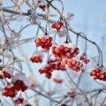 Сегодня днем,22 февраля, в Украине до 8 градусов мороза