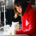 В Житомирі будуть безкоштовно стерилізувати безпритульних кішок та котів