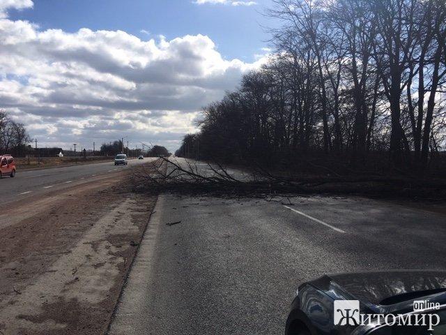На трасі Житомир-Бердичів раптово впало дерево. ФОТО