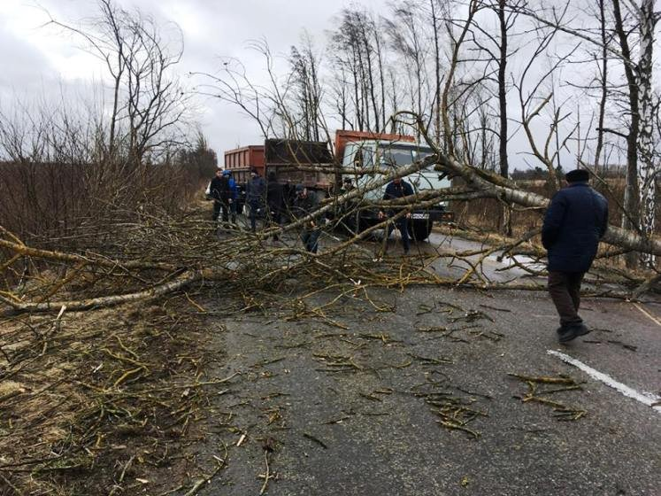 На Житомирщині більше сотні рятувальників прибирали повалені дерева