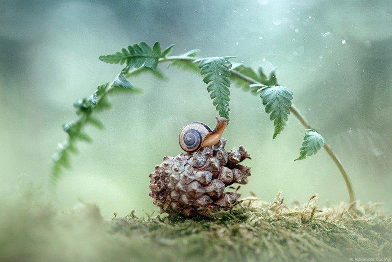 Казкова реальність: Фотограф з Житомирщини знімає фантастичне макро. ФОТО