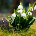 Прогноз погоди в Житомирі на 5 березня