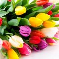 """Сайт """"Житомир-онлайн"""" вітає всіх житомирянок з наступаючим 8 березня"""