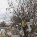 Знайомтесь. Околиця сміттєзвалища у Черняхові. ФОТО