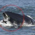 Біля узбережжя ПАР кит випадково піймав до рота дайвера. Але швидко виплюнув. ВІДЕО