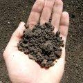 На Житомирщині за втручання прокуратури звільнено самовільно зайняті майже 130 га сільськогосподарських угідь вартістю 13 млн грн