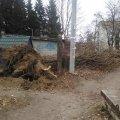 На Житомирщині вчорашній буревій звалив дерево на території дитячого садочка. ФОТО