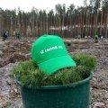 23,5 мільйона дерев висадять цього року в держлісгоспах Житомирщини