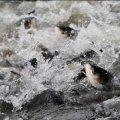 В Житомирі на зариблення водойми планують використати майже 2 тонни риби