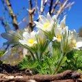 Прогноз погоди в Житомирі на вихідних - 16-17 березня