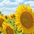 Украинцам пообещали холодное короткое лето
