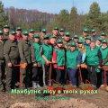 Від початку 2019-го року на території ДП «Малинський лісгосп АПК» посадили лісу на площі понад 60 га