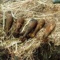 На Житомирщині піротехніками було знищено 7 вибухонебезпечних предметів часів минулих війн