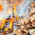 За спалювання листя та сміття – штраф