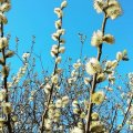 Синоптик сделал прогноз погоды на Пасху и майские праздники