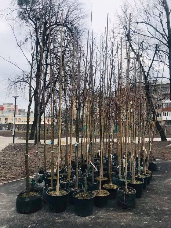 В Житомирі у сквері на Лятошинського активно тривають роботи з озеленення території