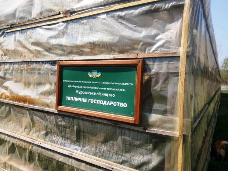 Як виглядають молоденькі сходи сосни у лісництві на Житомирщині. ФОТО