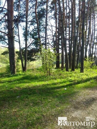 Чаруюча та захоплююча природа на околицях Житомира. ФОТО