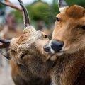 В лісових масивах Житомирщини розпочато сезон тиші
